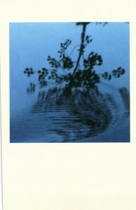 2014 Syrah Piranha Waterdance